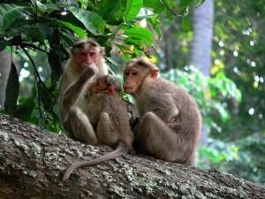 Animals also do Infidelity